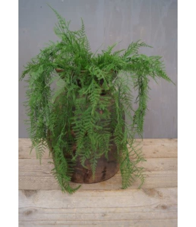 # W581 - Asparagus - kunst - 65 x 45 x 12 cm