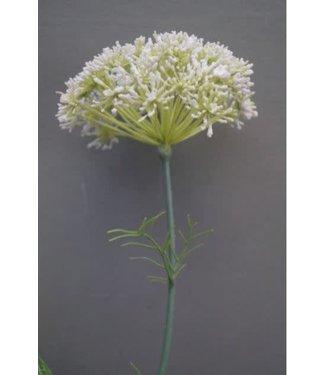 *E613 - Daucus carota wit - kunst - l95,88b10,79h13,33cm