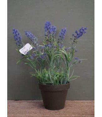 # B302 - Lavendel in potje - 14 x 14 x 24 cm