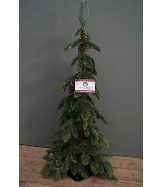 *Kerstboom - imitatie - Alpine miniboom vol PE - 75 cm