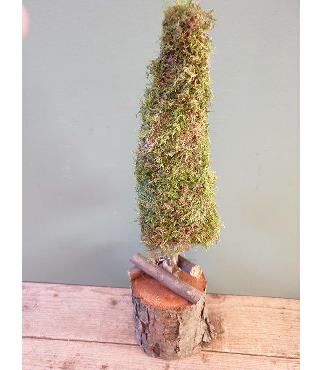 *Tree Moha Moss - 14 x 12 x 50 cm
