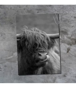 *E881 - Ansichtkaart - schotse hooglander