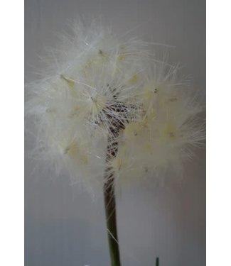 *W662 - Dandelion - kunst - 76 x 9 x 7 cm