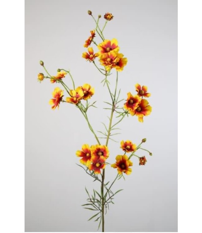 # I285 - Helenium Spray 84cm