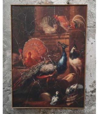 # Muse pauw op doek in houten lijst - 51 x 71 cm
