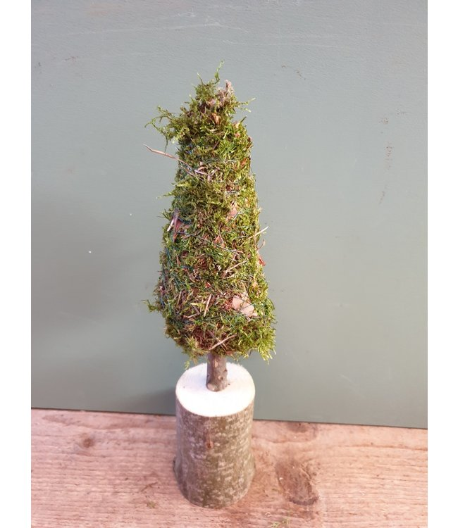 *Tree Moha Moss d11 x h28 cm