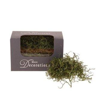 Q201 - Doosje met 30 gram tilandsia - groen
