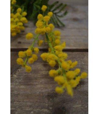 # W458 - Mimosa - kunst - 68 x 15 x 7 cm