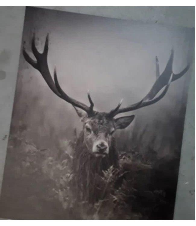 # J072 - Schilderspaneel - Hert - 45 x 54 x 1 cm