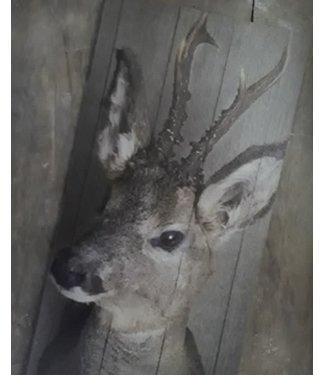 # Hertje vooraanzicht deco bord - 15 x 30 cm