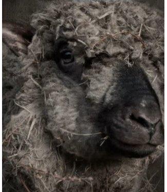 # B451 - Tuinposter - donker schaap - stevig weerbestendig dubbelzijdig pvc gecoat doek - 82 x 112 cm