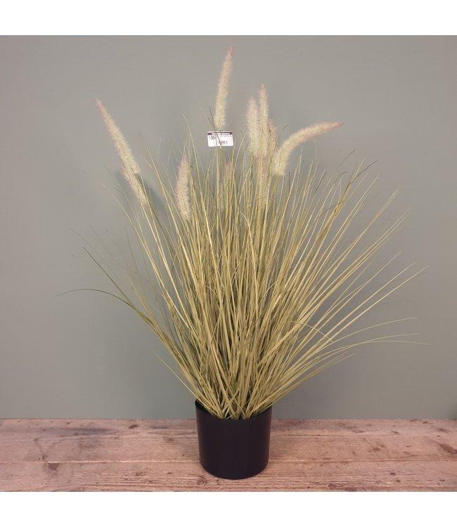 # A589 - Dogtail Grass W/Pot  - 44 x 44 x 80cm