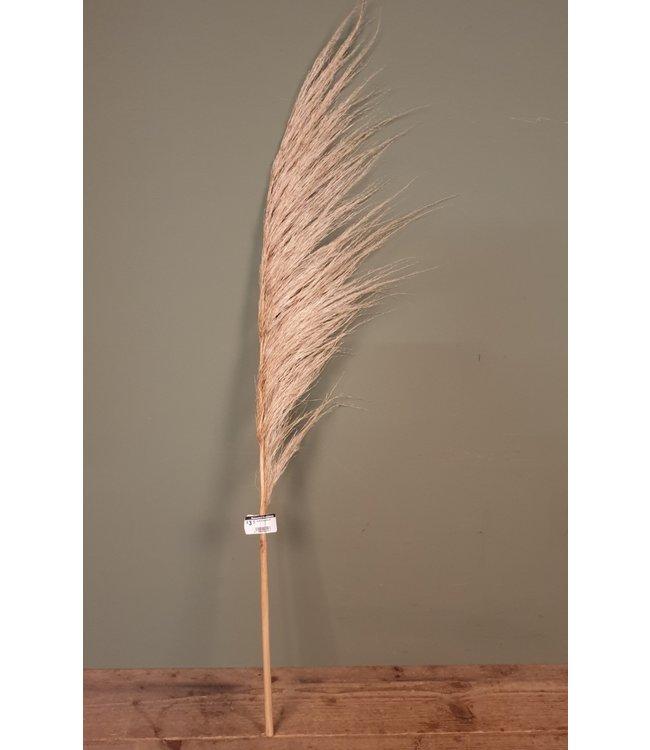 # Corta droog naturel - 105 x 15 x 1 cm - pluim