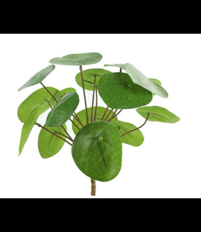 # Pilea peperomioides S groen - L8B8H25CM