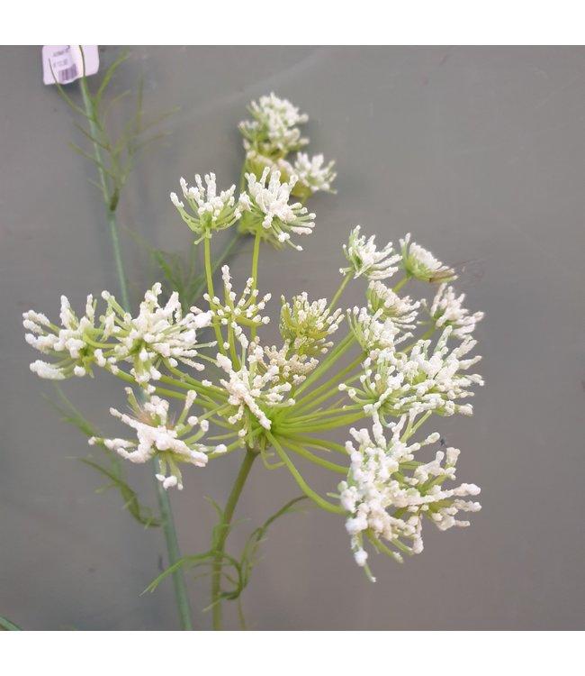 NT!!! -J589 -  dancus carota dille 120cm white