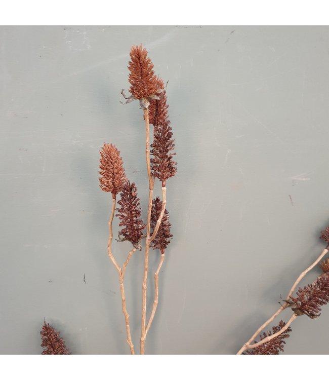 # Carduus bruin - kunst - L18B18H97CM