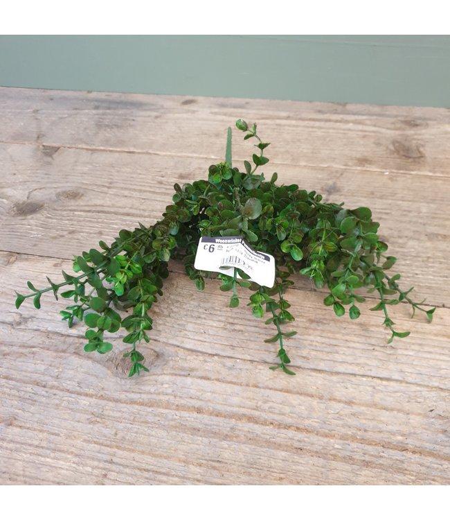 # C316 - money leaves bush. volle buxustak - kunst - 34 x 28 cm
