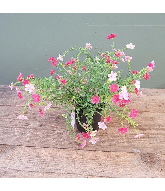 # J756 - Bloem in pot - roze - 20 x 24 cm