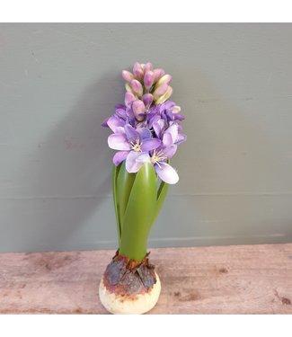 # J564 - Hyacinth Bulb w/weight 20cm
