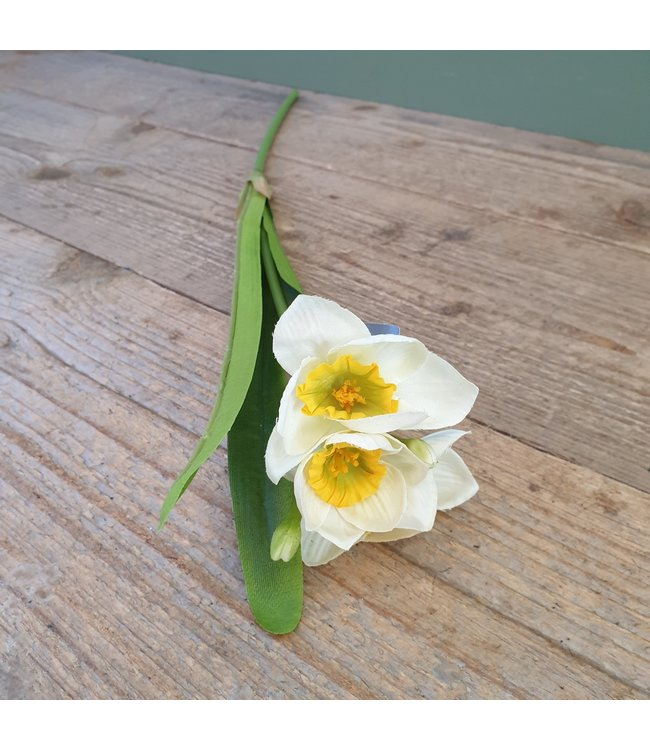 # Q894 - narcis wit geel - 57 x 10 x 7 cm