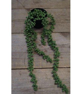 # J327 - senecio rowleyanus groen