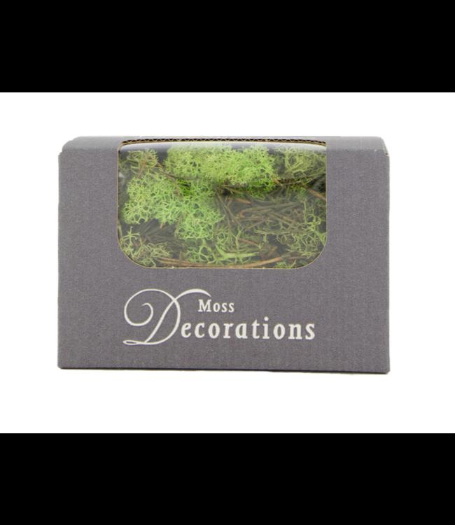 # Reindeermoss 50gr in box - Springgreen - rendiermos