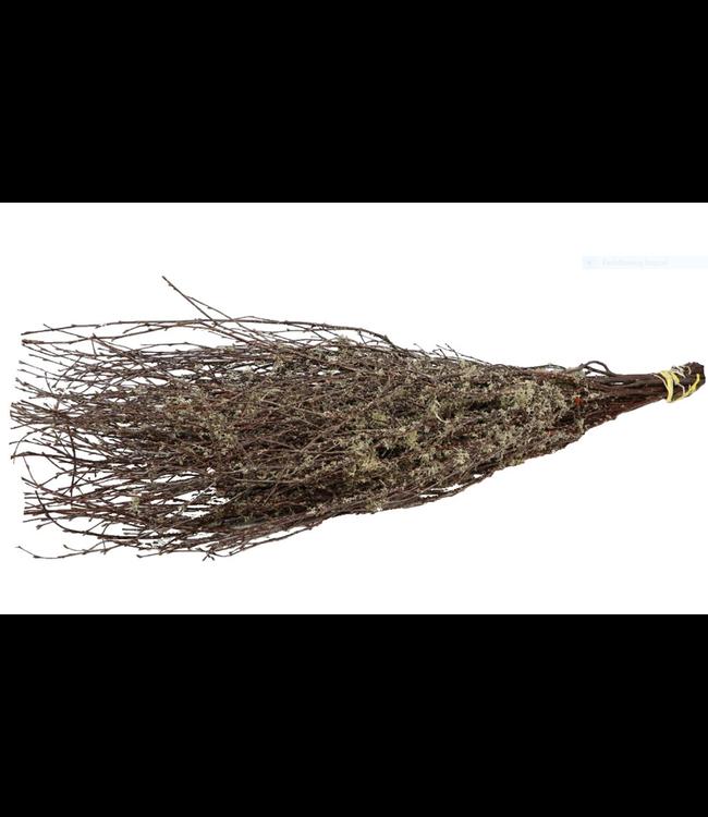 # Bundel berkentakken met mos - 125 cm