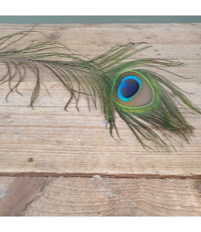 NT!! - I427 - pauwenveer - basic feather peacock 100-110