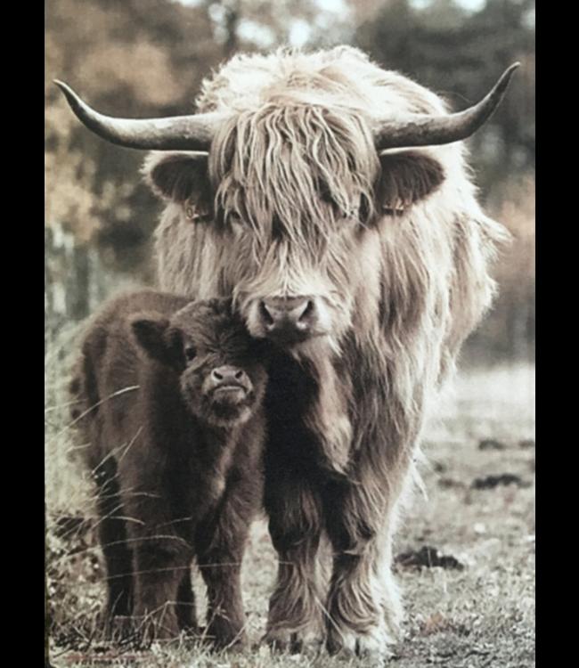 # Afbeelding hooglander met kalf - 14 x 19 cm