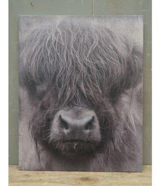 # W883 - Prent/afbeelding - schotse hooglander - A4 formaat - 24 x 30 x 0,5 cm