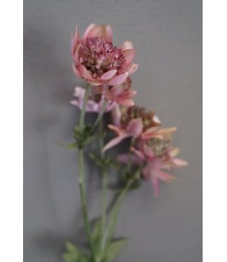 W455 - Astrantia - kunst - 5zijtakken met 7 bloemen - 58 cm