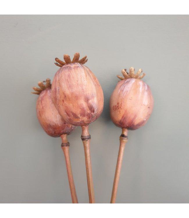 Poppy Pod Bundle x3 50cm - kunst - papaver