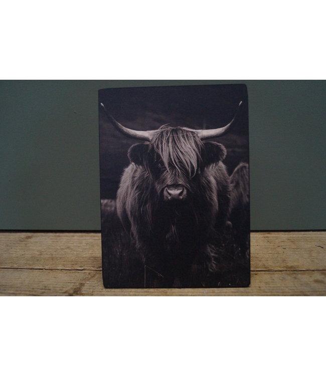 # B738 - Afbeelding op hardboard - hooglander met hoorns