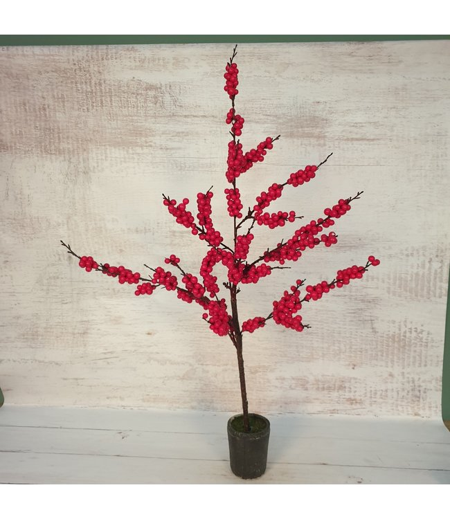 *Pyracantha S rood - Ilex - L29B29H92CM