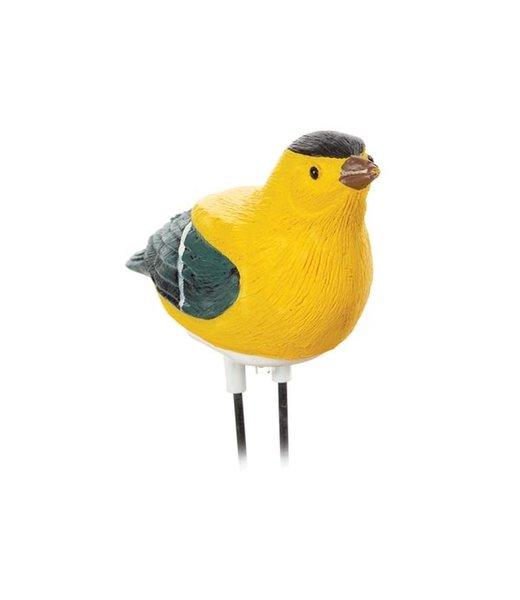 Planten droogteverklikker fluitende vogel vink