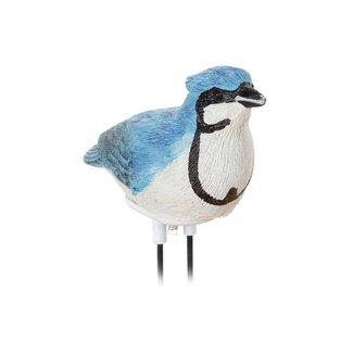 Planten droogteverklikker fluitende vogel blauwe gaai