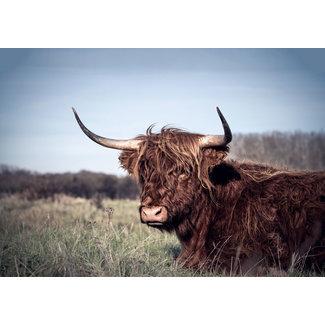 Omega Fotografie Tuinposter Karakteristieke Schotse Hooglander 135x95 cm
