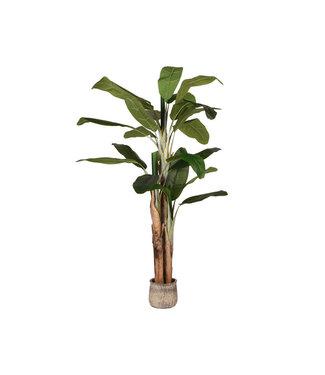Label51 LABEL51 Kunstplant Musa 110x110x180 cm - Groen - Kunststof