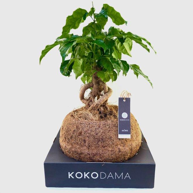 Urban Jungle bonsai box