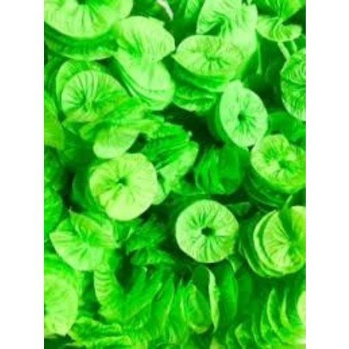Real Seda Papel para Bala Caracol 40und Verde Claro