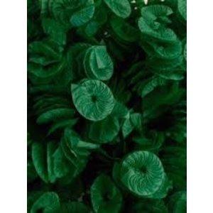 Real Seda Papel para Bala Caracol 40und Verde Escuro