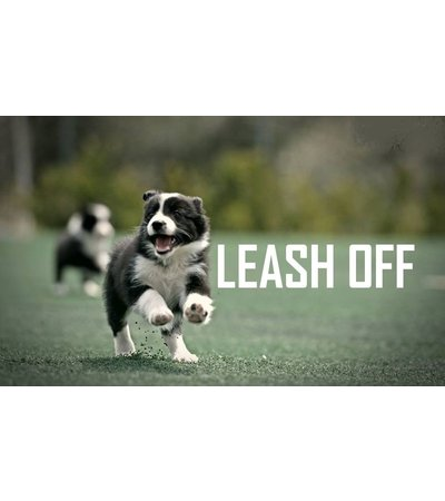 Leashes, leashes and belts