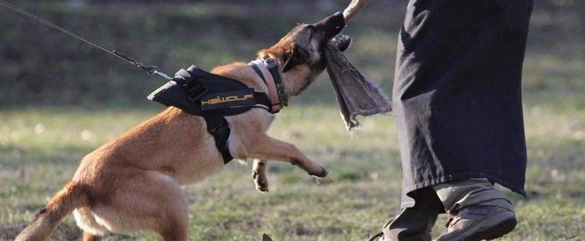 K9 Hondentuigen, de voordelen