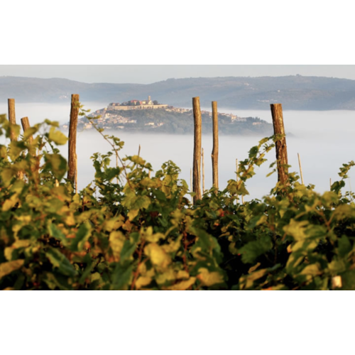 Benvenuti Malvazija Istarska 2019