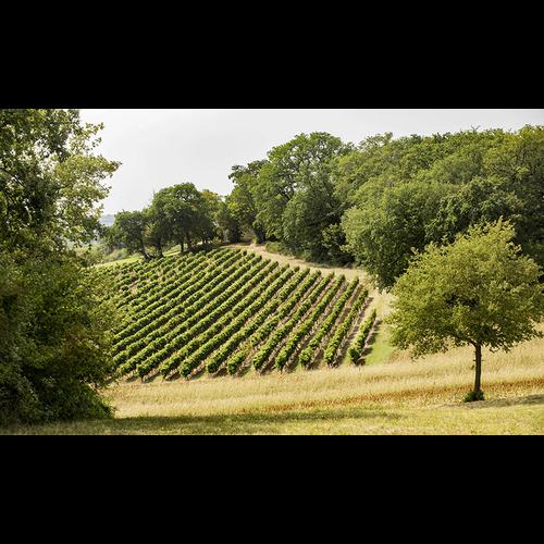 Le Quartier Sauvignon Blanc de Menilmontant 2019