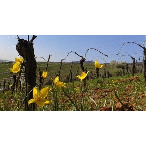 Vignoble des 2 Lunes Pinot Noir Périgée 2019