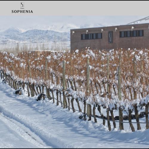 Sophenia Synthesis Cabernet Sauvignon 2017