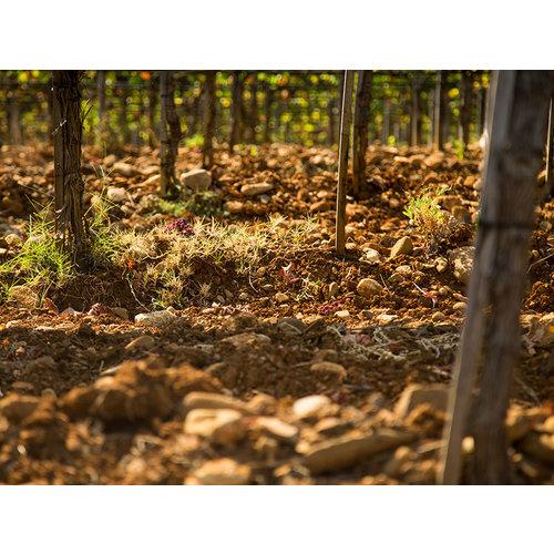 Tenuta di Sesta Poggio d'Arna - Rosso Toscana 2016