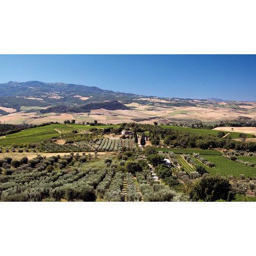 Tenuta di Sesta Brunello di Montalcino 2015