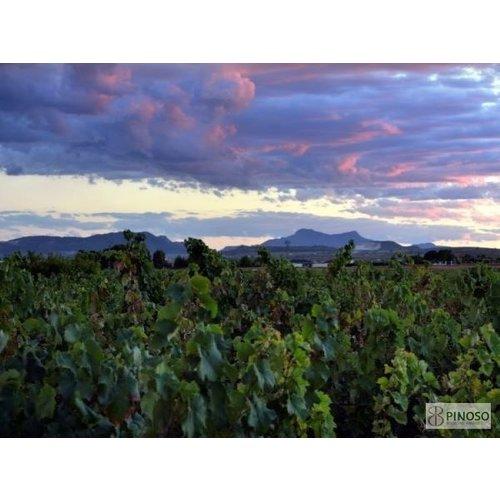 La Bodega de Pinoso Vergel Tinto Seleccion 2016